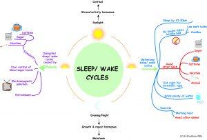 sleep-wake-cycle